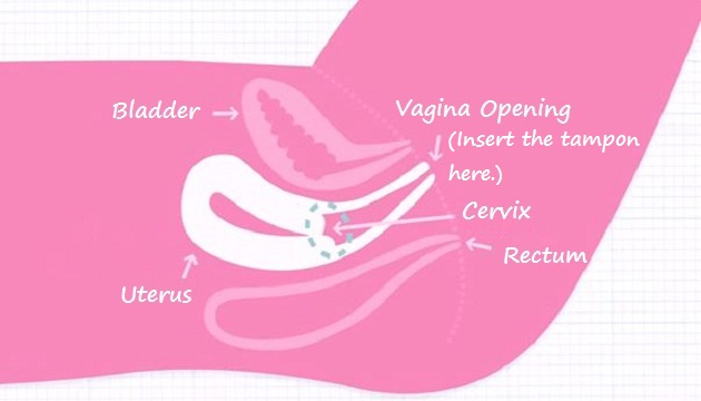 Where to insert a tampon (diagram)