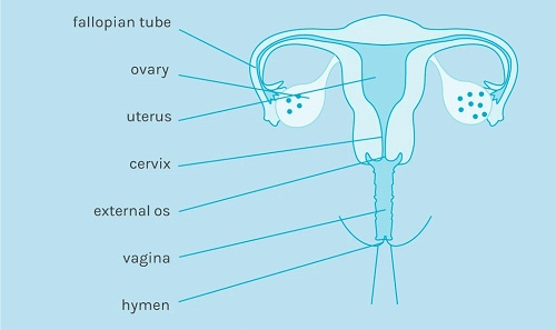 Where is my cervix?